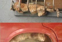 Cats / by Nemetona Laban