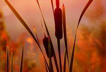 Sun Rise - Sun Set / photos of sunrise and sunset / by Debra Wickham