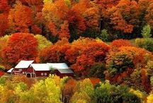 Fall Foliage / Fiery reds, deep plums, golden browns - foliage illuminates the trees with vibrant colors during the fall