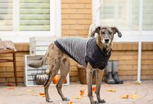 The Cold Weather Collection 2016 / Fall & Winter Wear by Bailey & Bella, get it at your local Bosley's by Pet Valu!
