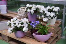 Planta de Interior con Flor / Planta de interior con flor