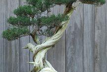 盆栽-bonsai-