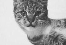 Pet Stuff / by Jenny Miller