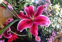 Flowers are always photogenic