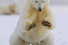 zdjęcia zwierzątek