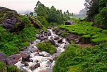 7 Days Kerala Tour package for Rs 16,000. / http://travelgowell.in/kerala-holidays/7-days-kerala-tour-packages/munnar-thekkady-alappy-kovalam-kanyakumari.html.7 Days Kerala Tour package for Rs16,000. covering Munnar ,Thekkady,Alappy,Kovalam & Kanyakumari