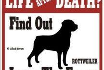 Rottweiler Love ♡