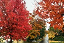 Fall Color in Bayfield, WI / The name says it all, folks. / by Old Rittenhouse Inn