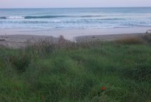 Flowers & Seascapes