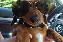 Pets Wearing Sunglasses / Pals keeping cool this summer by wearing shades!