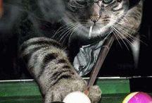 Funny Billiards Memes