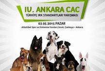 Elie Ankara CAC DOG SHOW - Türkiye / Elie 5 months old Dog Show Ankara Türkiye 03.05.2015. Elie Baby Class 1 - BEST BABY