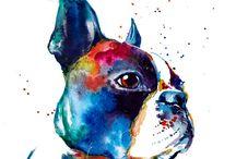 boston terriers♡