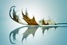 Art and photography I like / by Cherie Willingham Graupman