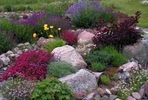Hus - trädgård