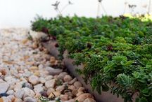 Greenroof projects / by green•eye•design, llc