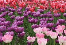 Jardim em Flores