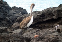 Galapagos / Wonderful islands...even at low cost. Isole meravigliose, anche low cost.