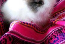 My little friend, teddy dwerg bunny. / Bunny