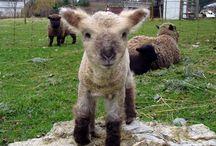 "I will have a ""tiny farm"" one day;)"
