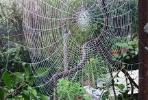 Pókok és hálóik