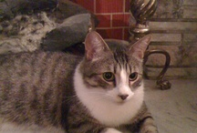 cats I want (from cat rescue sites) / by Lyndsey McCollam
