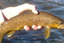 American West Fishing