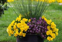 Flowers / Ideas y consejos para el jardín