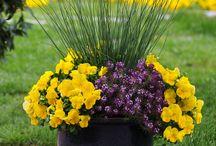 Rostliny v nádobách