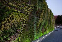 zaj zielen