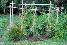 Association de plantes au jardin