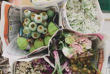 Blooms / Flowers
