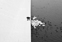 Black 'n White Photography