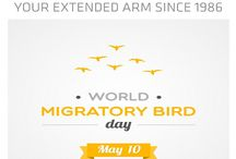 10 May World Migratory Bird Day / World Migratory Bird Day was initiated in 2006 and is a global awareness-raising campaign highlighting the need for the protection of migratory birds.Onthe second weekend each May,people around the world take action,organise public events such as bird festivals,education programmes and bird-watching excursions to celebrate WMB.The theme for 2014 was 'Destination Flyways:Migratory Birds and Tourism' highlighting the links between migratory bird conservation,watching tourism around the world.
