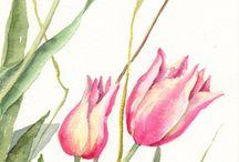 Çiçekler / En sevilen çiçekler