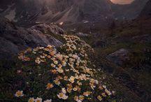 fotografie přírody