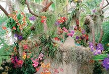 Orchidarium