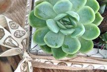 Composizioni floreali - piante grasse / Ricca selezione di composizioni floreali con piante grasse realizzate con la rete metallica da pollaio
