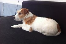 Mijn lieve hond Guusje!!! / Mijn lieve hond
