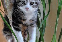 My kitten my meow