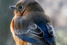 bluebirds / when i was young my father and i made bluebird houses and hung them on trees in our back yard.