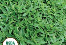 Herbs 2017 / Seasonal herbs start arriving April 12 2017