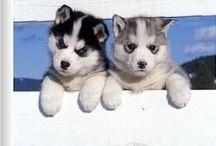 Cute dogii's!!!!