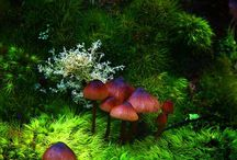 fungi / by Jerry Tyson