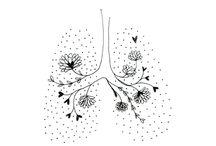 Herz und Lunge