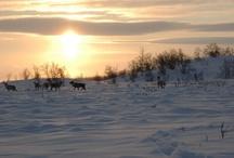 Lappi - Lapland