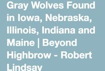 Wolves in Illinois / News, Information and Status of Wolves in Illinois