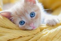 Kittens, Kittens and Cats(Cute animals) / Adorable animal pictures / by Kiana Alia