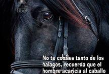 caballos y frases
