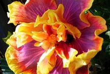 flowers / by Geri Boggess